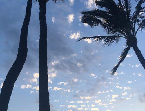 Aloha from Maui and Mahalo for Five Years